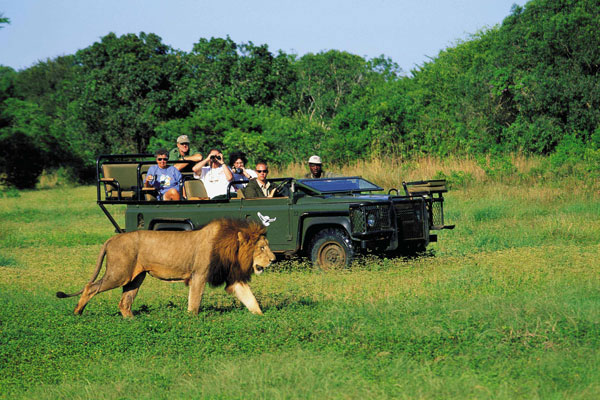 The Unique Safari Tour