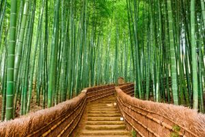 Bamboo Is Increasing In Popularity But Is It Really Sustainable
