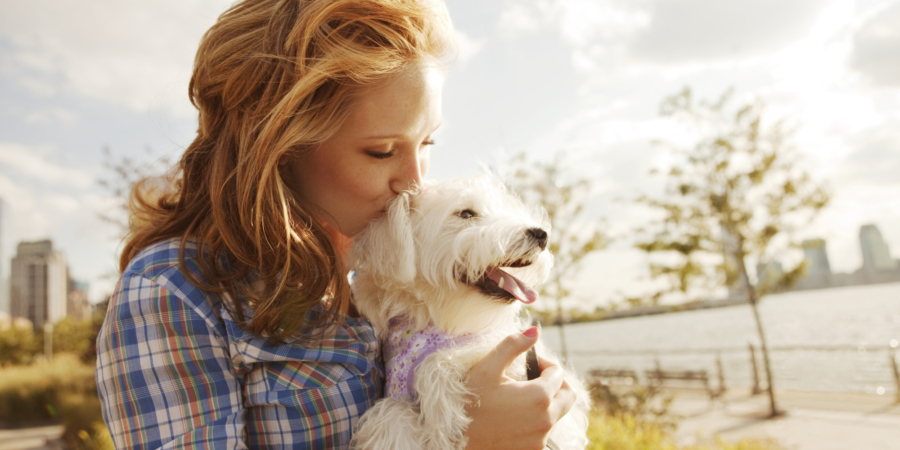 So Many Insurance Companies Offering Their Other Services As Well For Pet Sitters