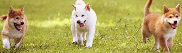 3 Ways To A Well-Socialized Dog