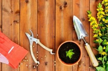 Gardening tips for beginner