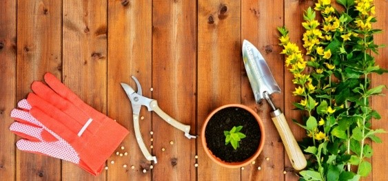 Gardening tips for beginner