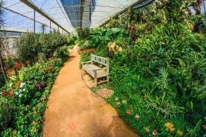 Indoor-Gardening-Vs.-Outdoor-Gardening-–-Which-One-You-Should-Prefer-e1617036301697.jpeg