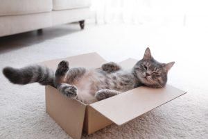 Is Your House Cat Friendly?