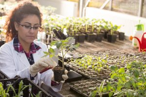 Horticultural Therapy: The Psychological Benefits Of Gardening